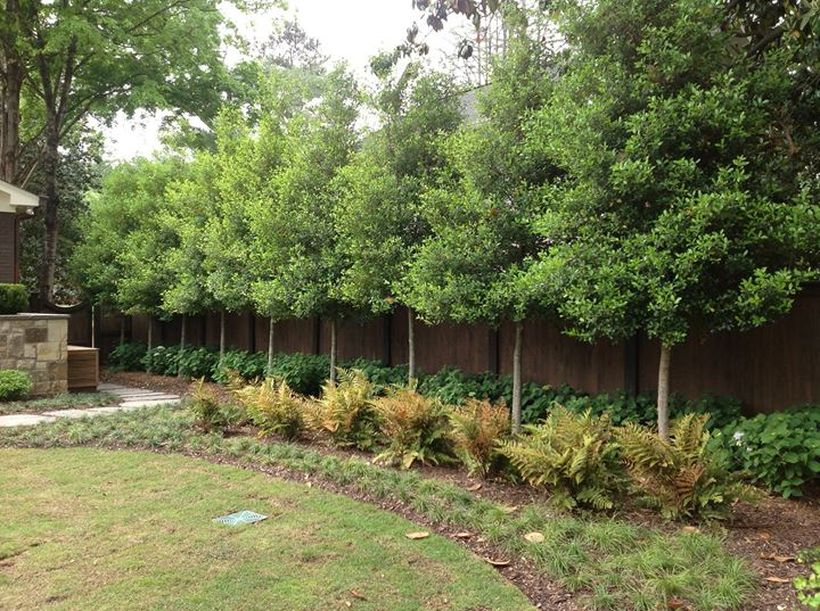 Awesome Fence With Evergreen Plants Landscaping Ideas 15 ...