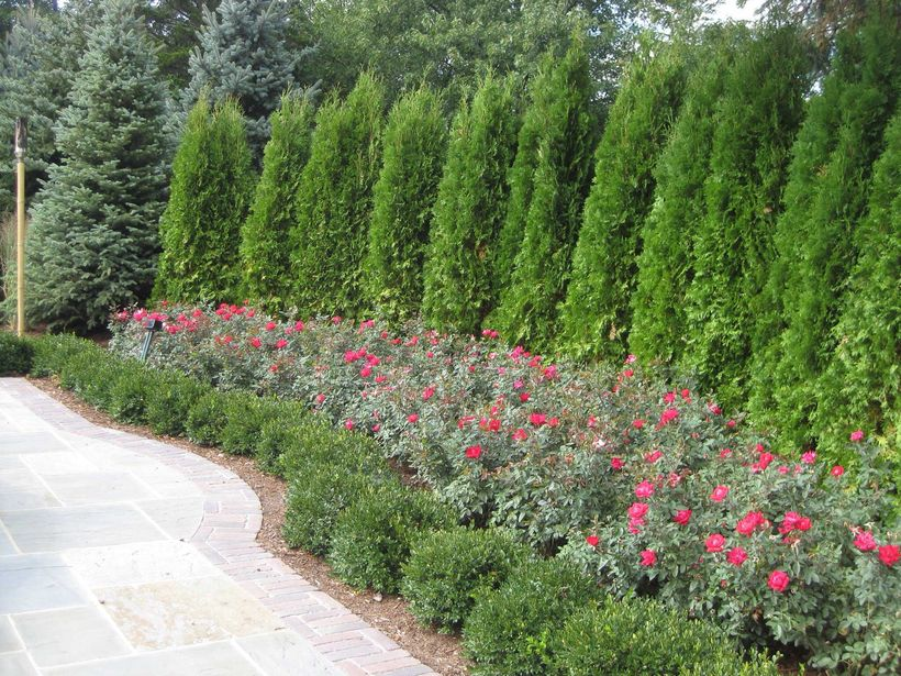 Awesome Fence With Evergreen Plants Landscaping Ideas 30 ...