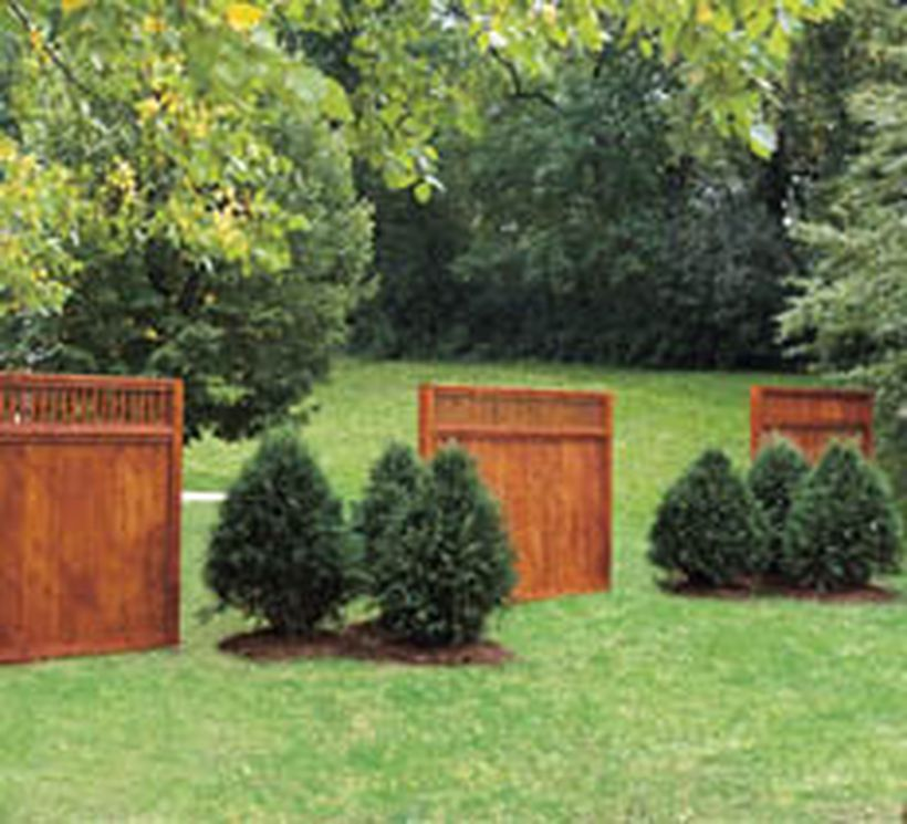 Cedar Tree Apartments: Awesome Fence With Evergreen Plants Landscaping Ideas 42