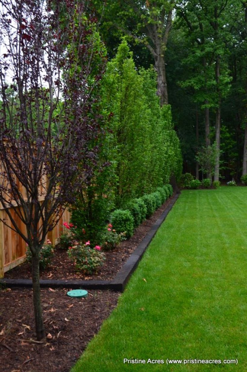 Awesome Fence With Evergreen Plants Landscaping Ideas 43 ...