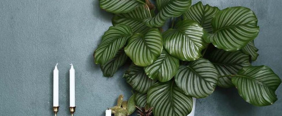 Beautiful beautiful home plants for your house ideas - Beautiful house plants ...