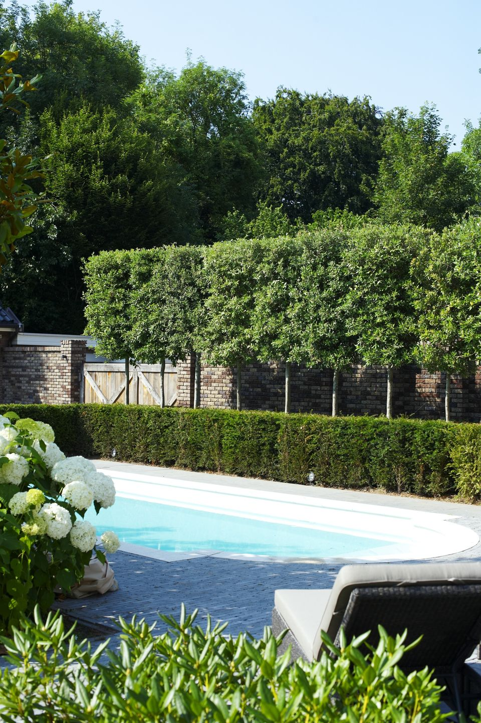 Fascinating Evergreen Pleached Trees for Outdoor ...