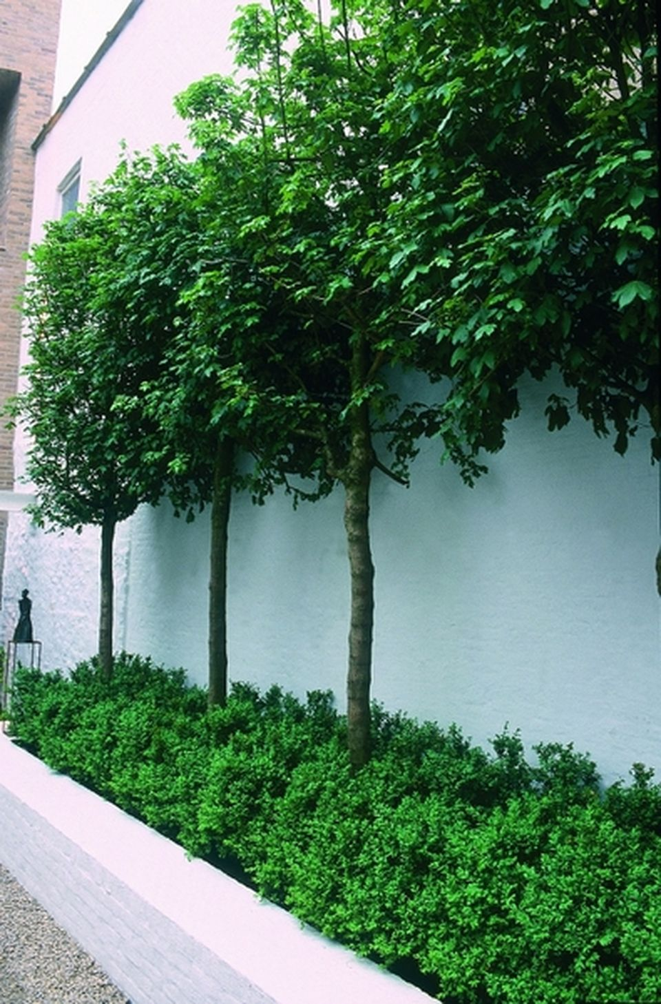 Outdoor Plants Nursery Located Between Santa Monica And: Fascinating Evergreen Pleached Trees For Outdoor