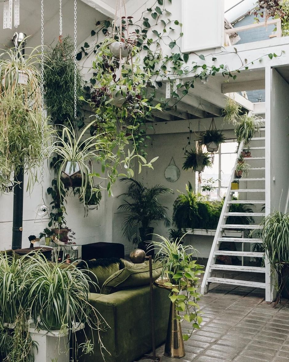 Plants Inside Rooms: Amazing Indoor Jungle Decorations Tips And Ideas 12
