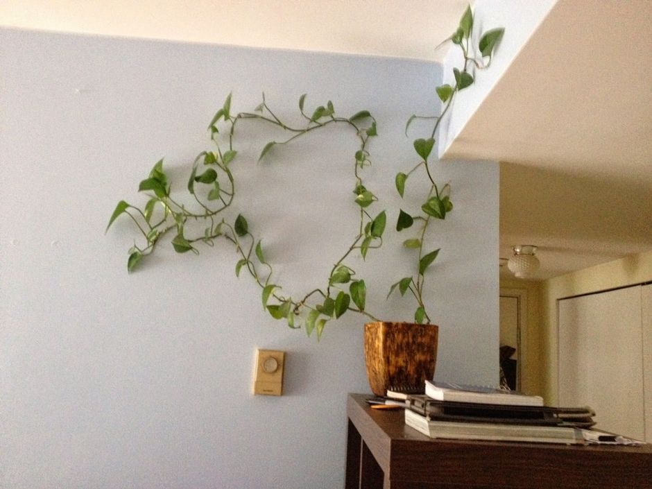Marvelous Indoor Vines And Climbing Plants Decorations 19