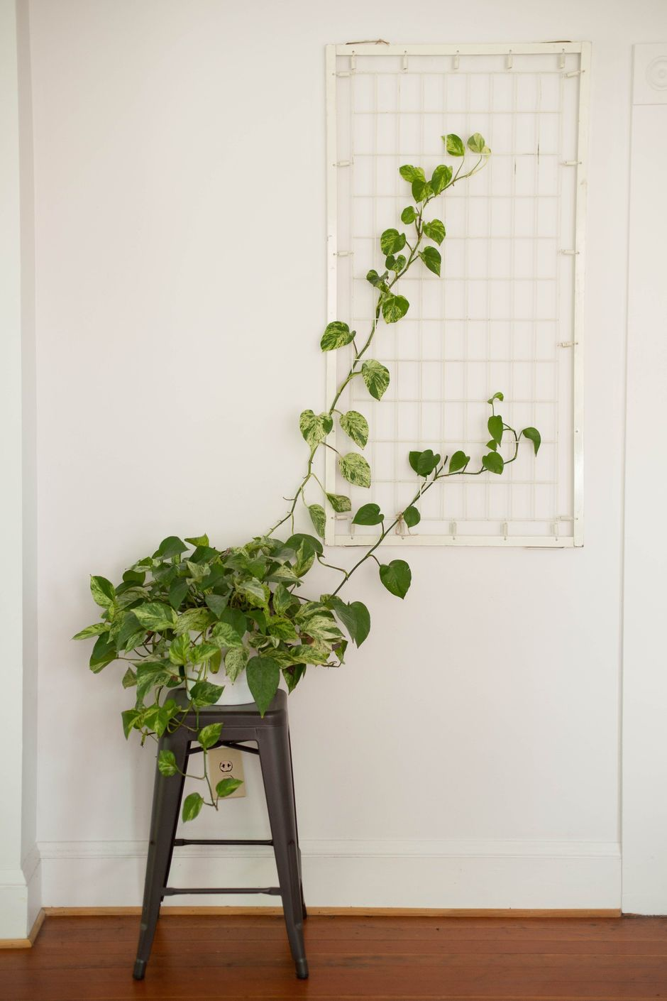 Marvelous Indoor Vines and Climbing Plants Decorations 21