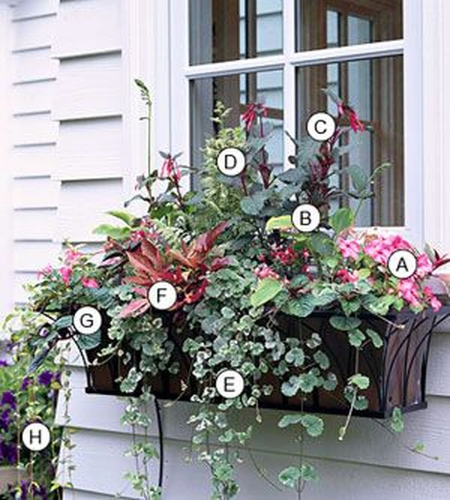 Perfect Shade Plants For Windows Boxes 55 Hoommy Com